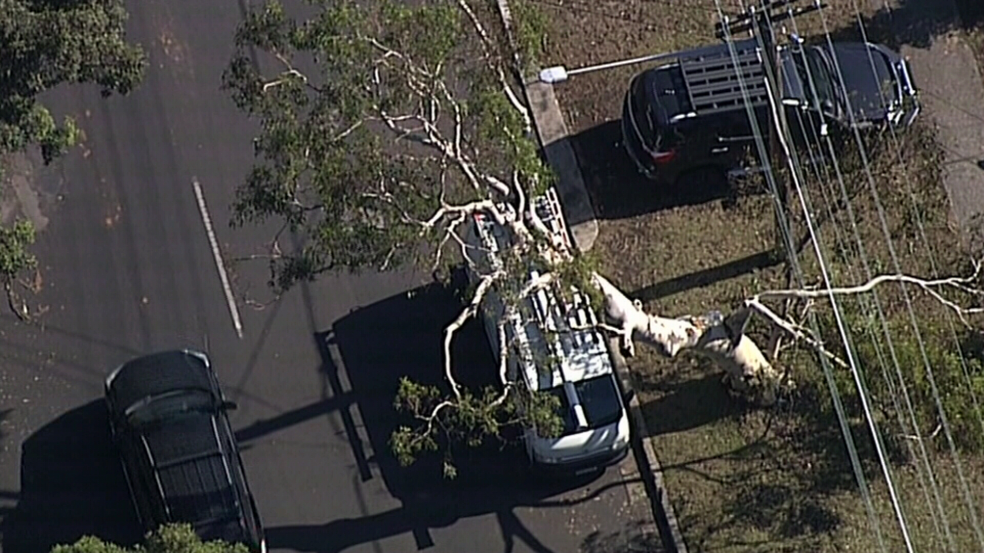 Trees fell on cars in the Sutherland Shire yesterday.
