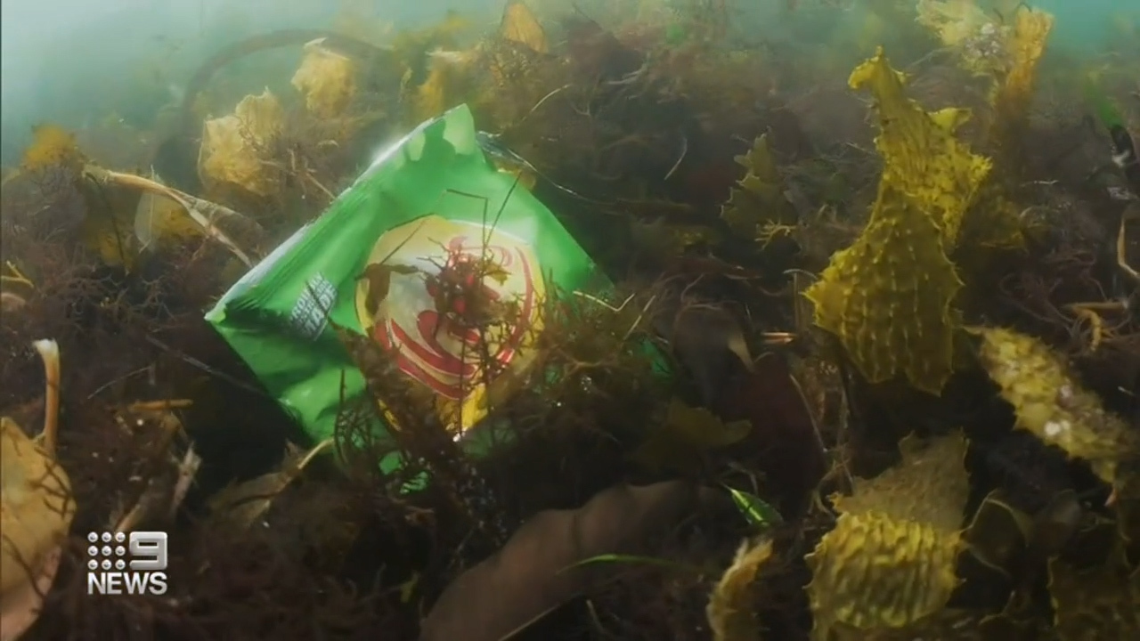 Diver trying to break world record with 24-hour underwater clean-up