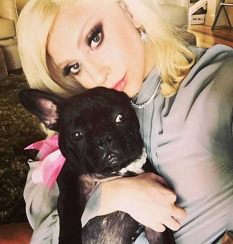 Lady Gaga and her dog Miss Asia