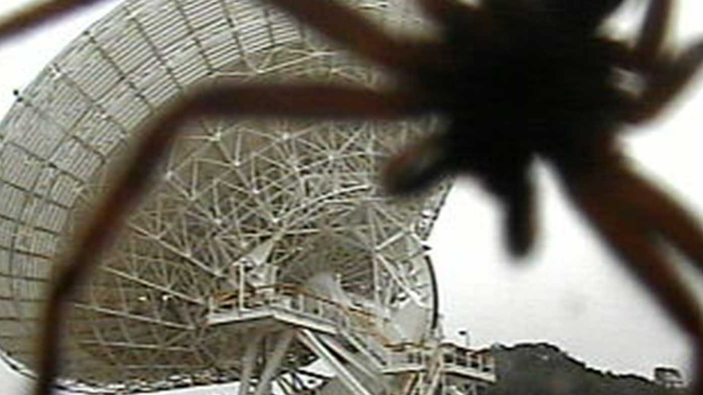 Giant spider crawls all over 34m space antenna in Canberra