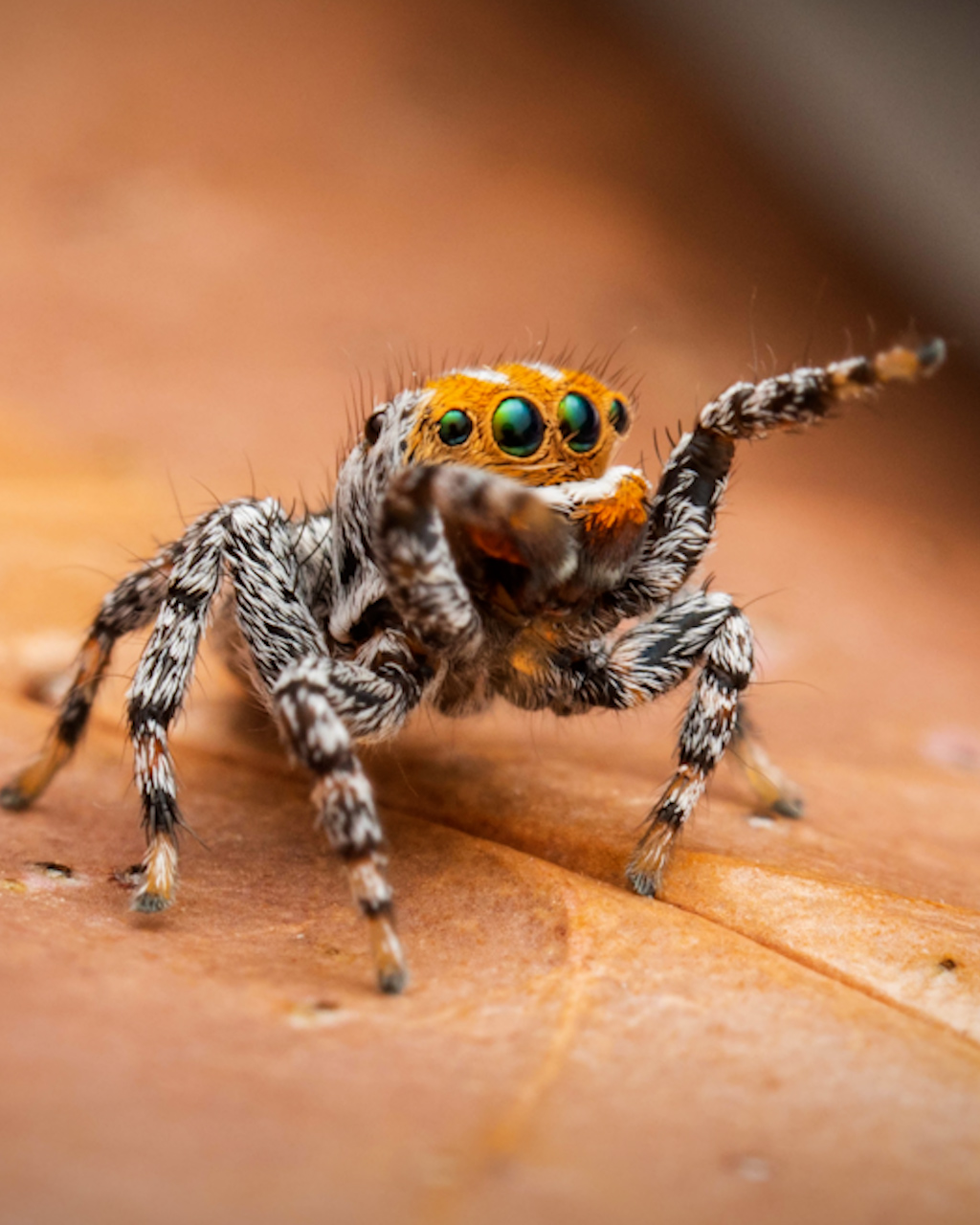 New species of spider named after beloved children's movie