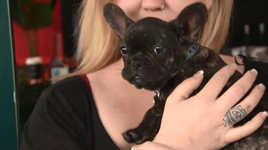 Queensland news: Stolen puppy found in woman's car at