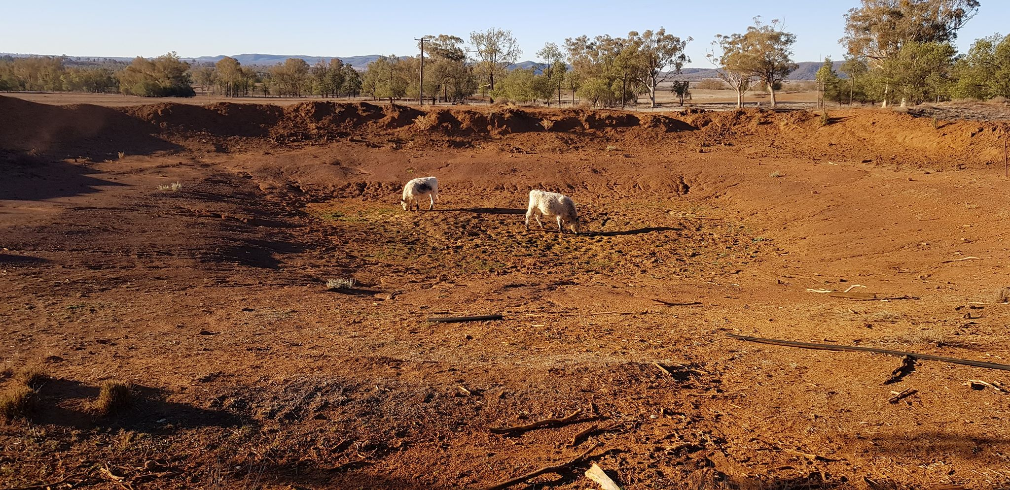 Their remaining cattle search for food and water in a dry dam.