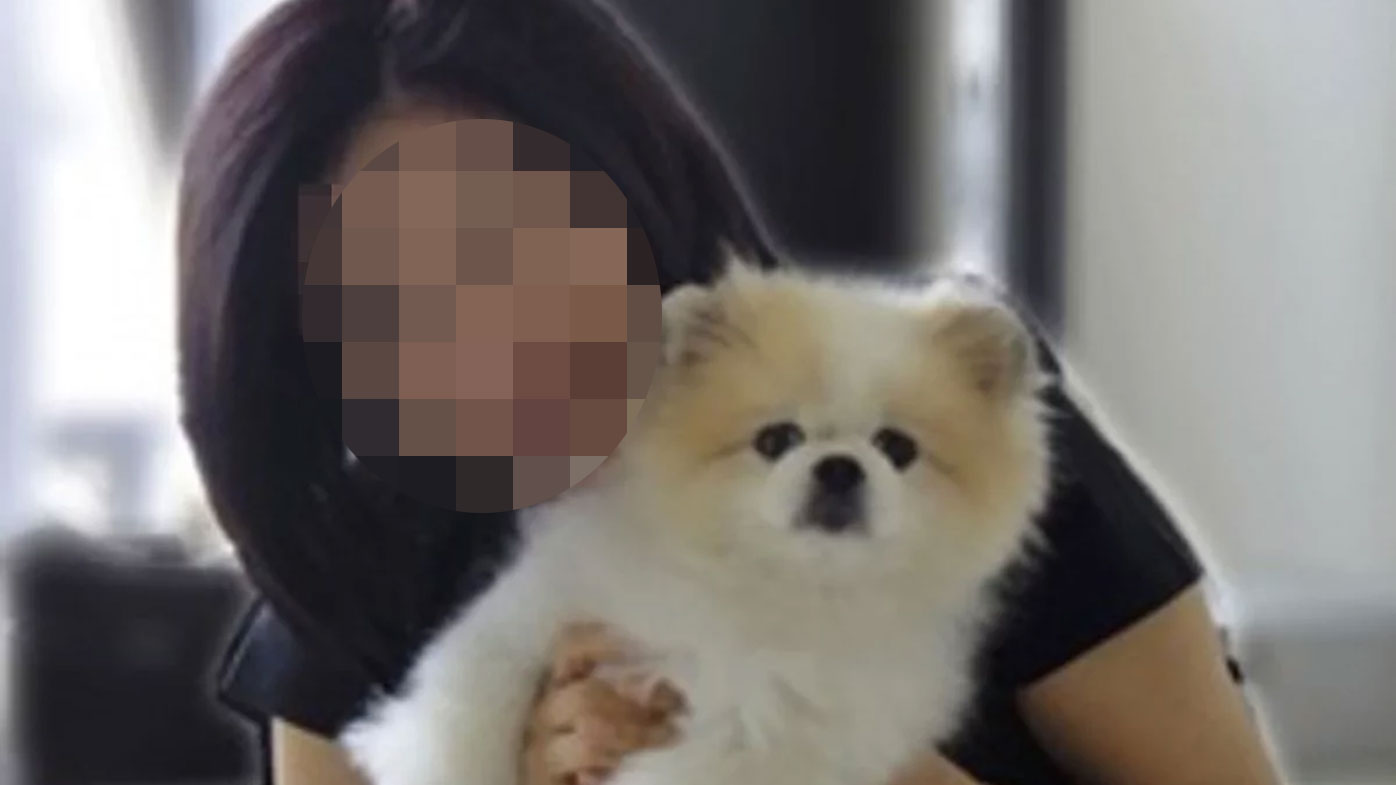The Pomeranian is the first confirmed case of human-to-animal transmission of coronavirus.
