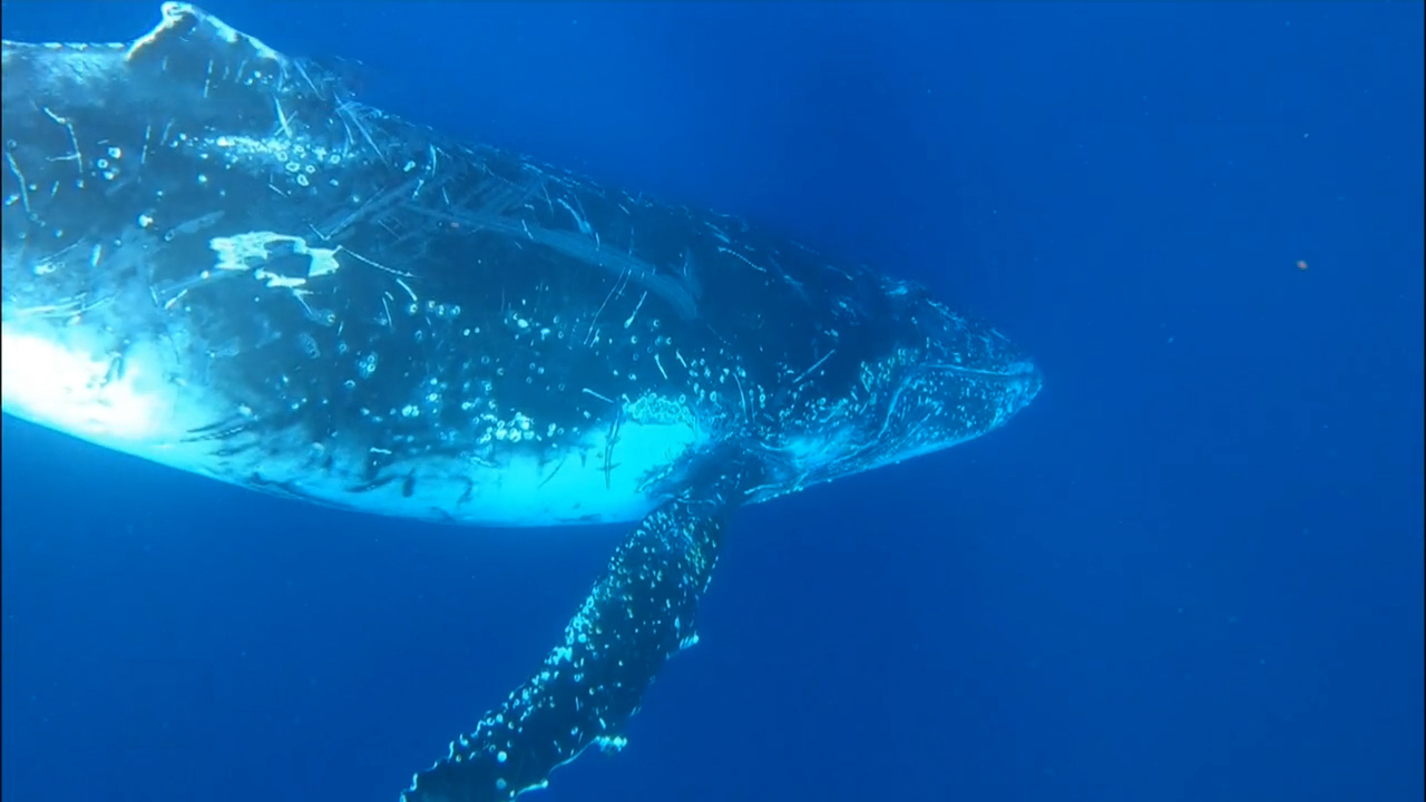 Sydney couple's close encounter with a humpback whale off NSW South Coast