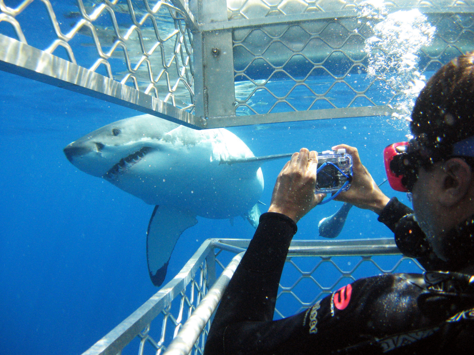 Swim with sharks in Eyre Peninsula