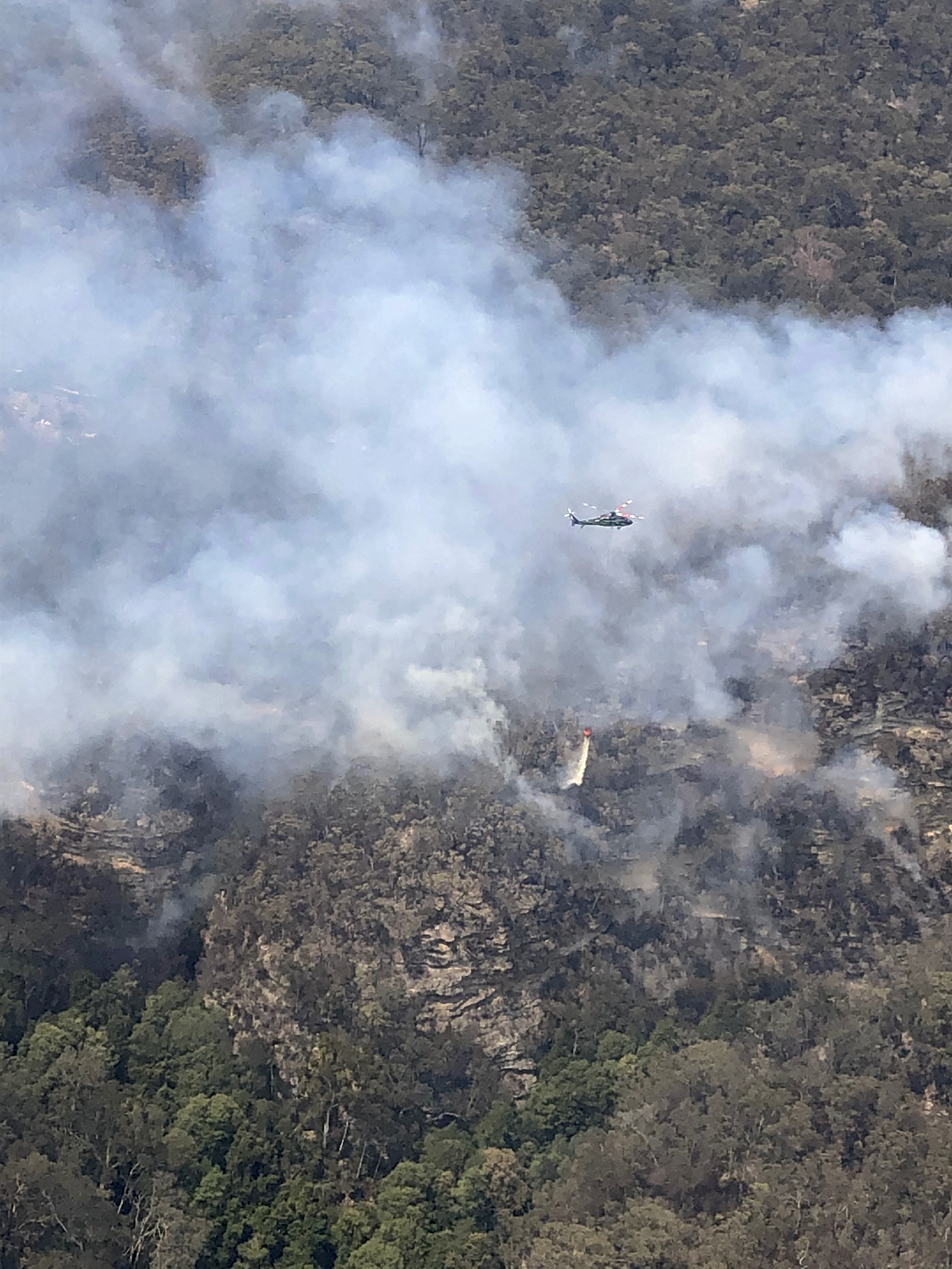 Inside top-secret mission to save last 'dinosaur trees' from fires