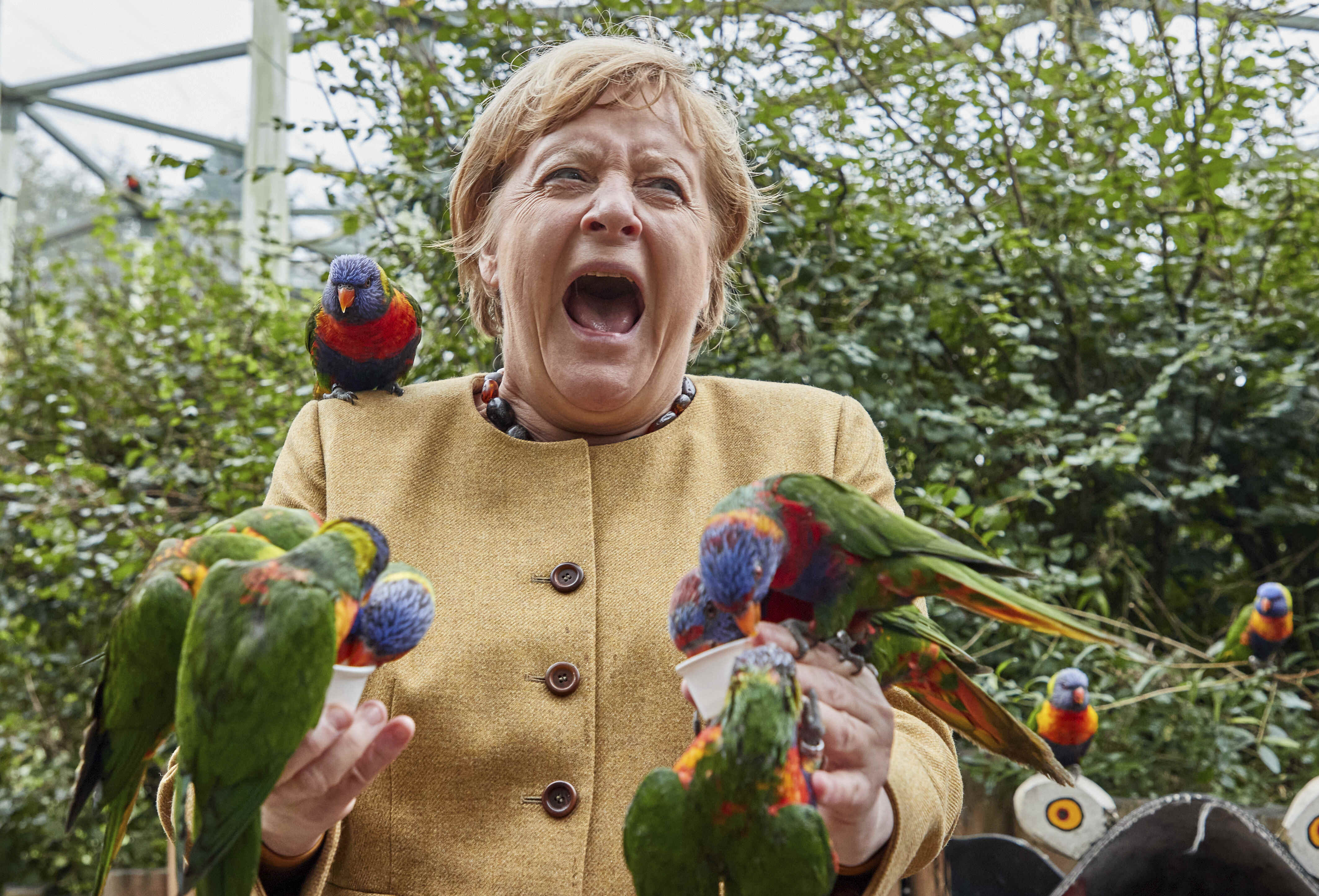 Angela Merkel pecked by parrot on the campaign trail in Germany