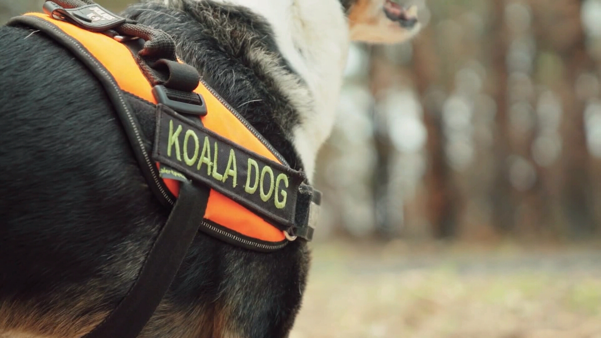 With their heightened sense of smell, dogs like Smudge are able to detect fresh droppings and alert humans.