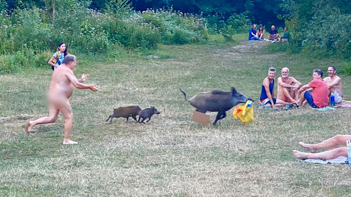 German nudist forced to chase cheeky boar thief